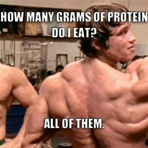 Protein Meme - 18 best meat head problems images on pinterest workout humor gym humor and funny fitness