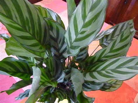 nom de plante verte d int 233 rieur fleuriste bulldo