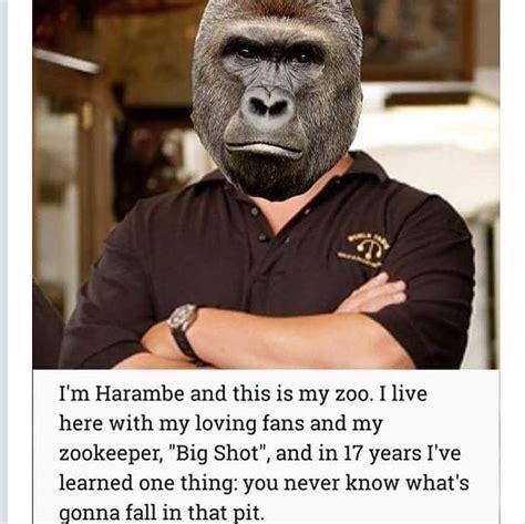 Dank Harambe Memes - 114 best dank memes images on pinterest dankest memes funny memes and funny pics