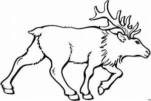Elch Vorlage Kostenlos : gehender elch ausmalbild malvorlage tiere ~ Lizthompson.info Haus und Dekorationen