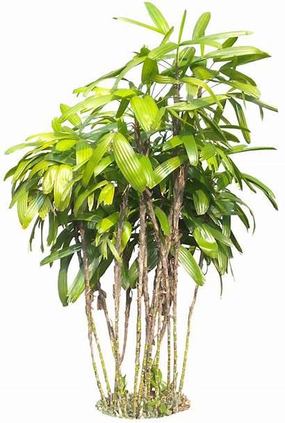 Plants Tropical Plant Tree Transparent Background Jungle