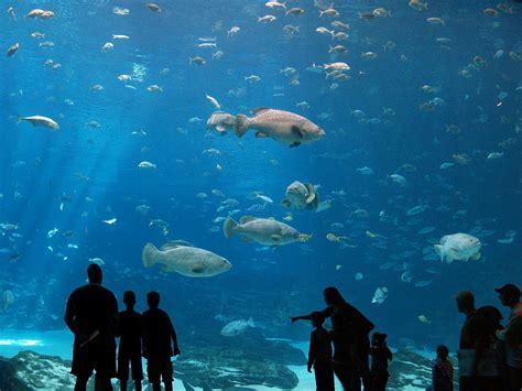 aquarium amaxing