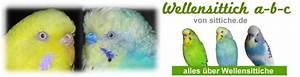 Alles über Wellensittiche : wellensittich abc alles rund um wellensittiche ~ Yasmunasinghe.com Haus und Dekorationen