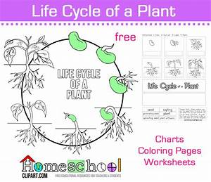 Seed To Plant Coloring And Worksheets