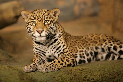 hide  seek   animal kingdom