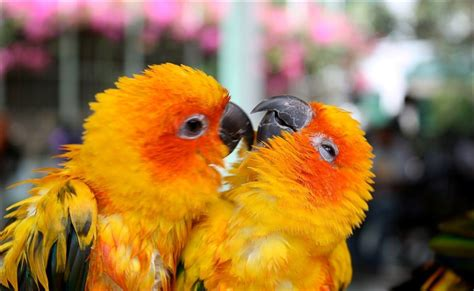 Love Bird Wallpapers - Wallpaper Cave