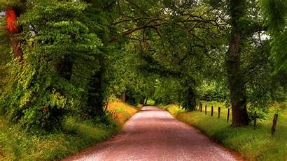 Tree Road Lined Wallpapers