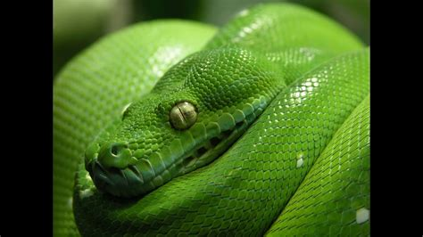 Cool Facts About Snakes - YouTube