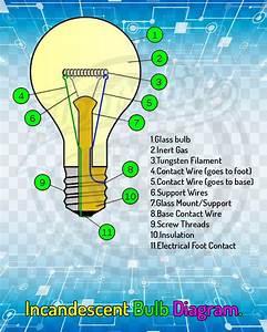 Incandescent Bulb Diagram