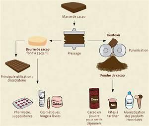 Beurre De Cacahuète En Poudre : beurre de cacao et poudre de cacao comment sont ils obtenus ~ Melissatoandfro.com Idées de Décoration