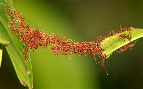 leadership teamwork talk   ant unimed living