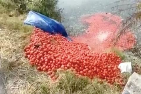 agra farmers forced  sell potatoes   paisekg