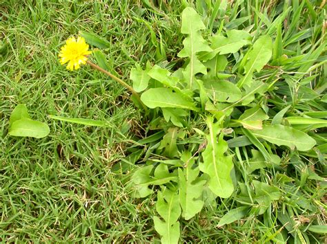 Proactive Lawn Weed Control