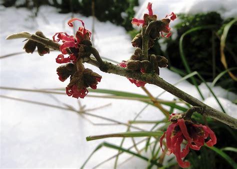 im winter blühende blumen blumen im winter es wird bunt couporando de