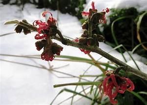 Blumen Im Winter : blumen im winter es wird bunt ~ Eleganceandgraceweddings.com Haus und Dekorationen
