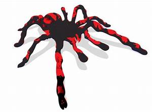 Spider Vector ClipArt Best