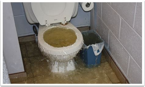 toilet not flushing but not clogged what your plumber has not told you about blocked drains