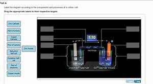 Label The Diagram According To The Components And