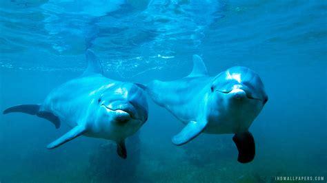 dolphin wallpaper underwater wallpaper hd wallpapersafari Underwater