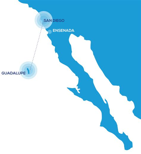 Liveaboard Boats For Rent San Diego by How To Get To Guadalupe Island Cage Diving Horizon