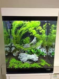 Aquarium Einrichten 60l : aquarium von anton nano cube 60l ~ Michelbontemps.com Haus und Dekorationen