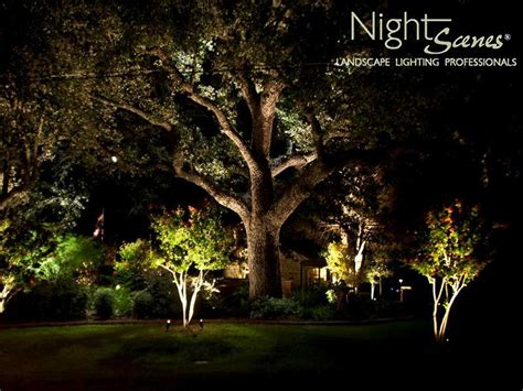 search results  oak trees page  nightscenes