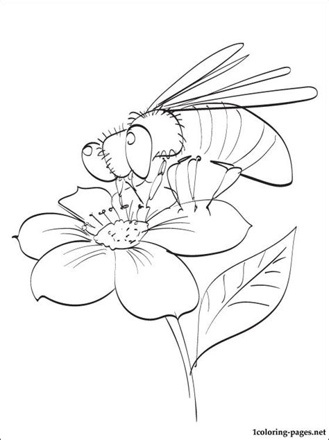 bee pollinating  spring flower coloring page coloring pages
