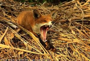 wildlife photography awards  oliver wilks  lands