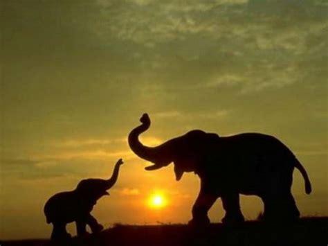 elephant screensavers  wallpaper wallpapersafari