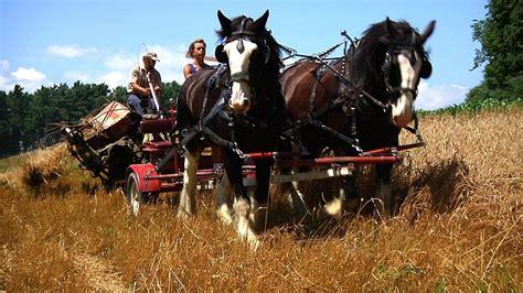 draft horse horses field farms minnesota northern fields animals mountain