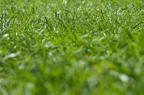 Rasen Vertikutieren Sommer by Rasen Vertikutieren Wann Und Wie Schweiz Tipps