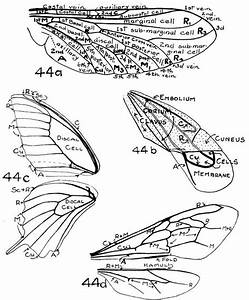 29 Best Insect Wing Tat Images On Pinterest
