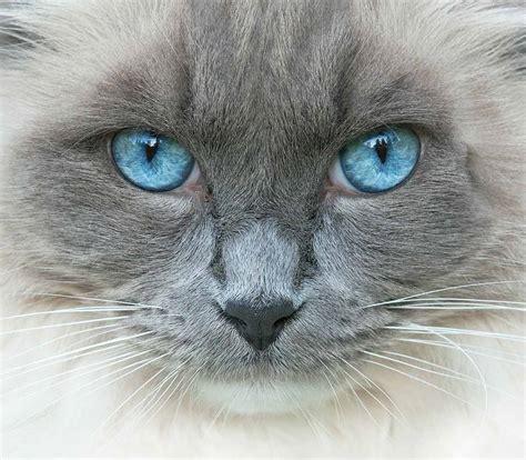 cat eye colors  amazing range  shades