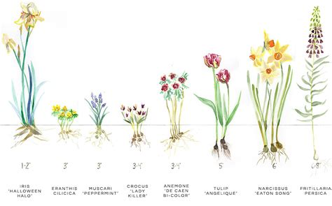 fall bulb planting guide the at terrain