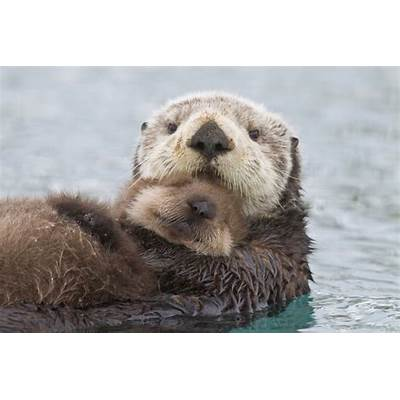10 Fun Facts About Sea Otters