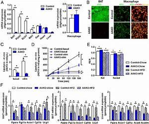 Effects Of Adipocyte