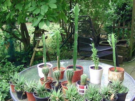 Pflegeleichte Pflanzen Für Innen- U. Außenbereich In