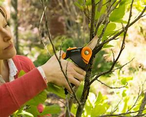 What to Prune In Late Fall | HGTV