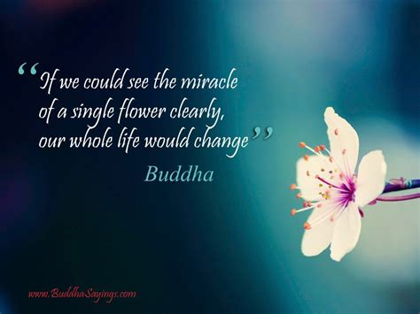 miracle   single flower