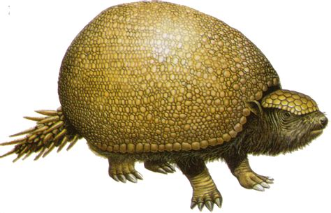 hair pins glyptodon age giants