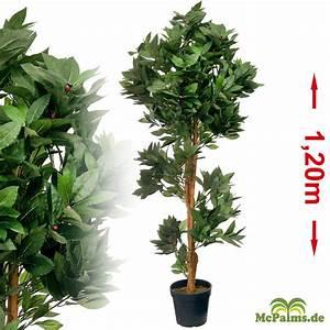 Kanarische Dattelpalme Kaufen : lorbeerbaum 1 20 m kunstpflanze g nstig kaufen ~ Lizthompson.info Haus und Dekorationen