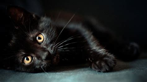 Background Black Cat by Black Cats Wallpapers Wallpaper Cave