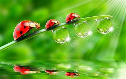 Water Drop Wallpapers Drops Cool Droplets Background
