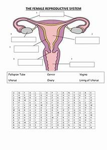 female reproductive system by vinnie254 - Teaching ...