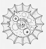 Coloring Amoeba Template Mandala Amoebas Shell sketch template