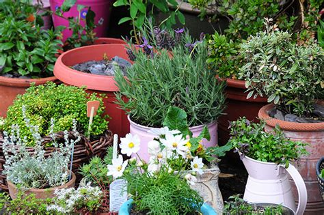 Tips To Create A Beautiful Container Gardening Display