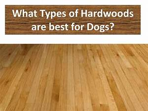 hardwood floors and dogs flooring ideas home With what are the different types of wood flooring