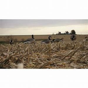 Mayhem Canada Goose Field Decoys  Flocked Heads  6 Pack