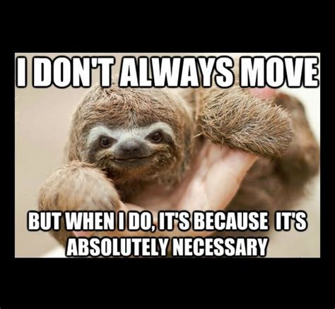sloth memes lovequotesmessages