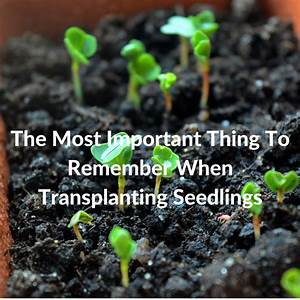 The Most Important Thing To Remember When Transplanting